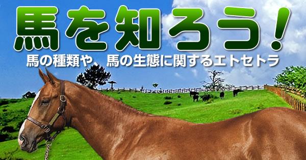馬を知ろう!